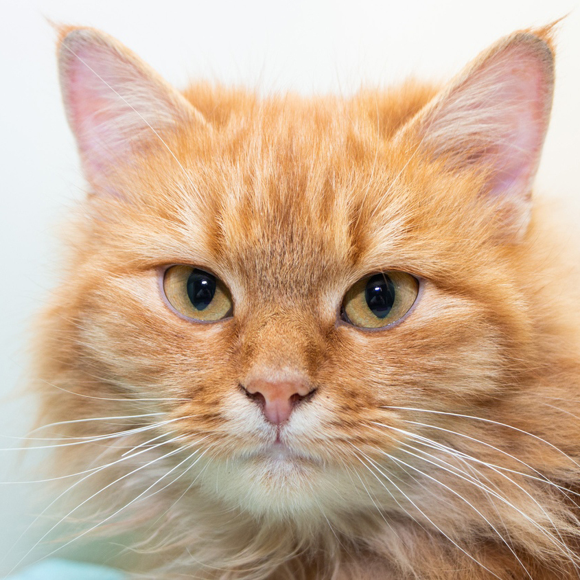 День апельсиновых котов 4 МАРТА | Orange Cat