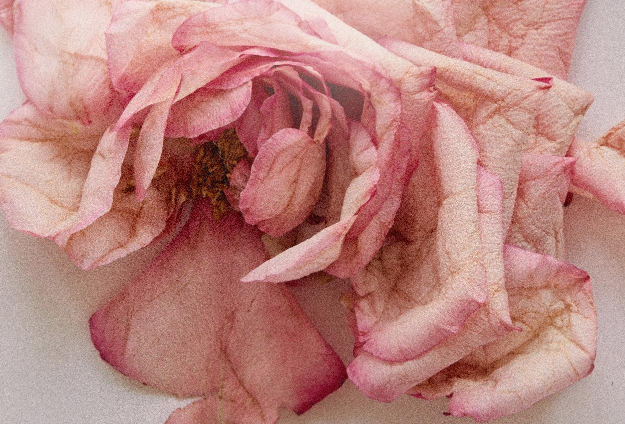 Rose Atlantic